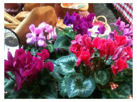 Cyclamen grow well in cool areas, making them ideal Alaskan Houseplants.