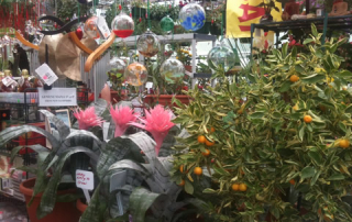 Calamondin Tree and Bromeliads