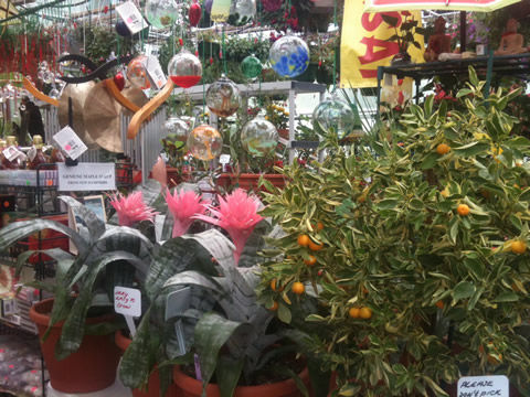 Calamondin Tree and Bromeliads